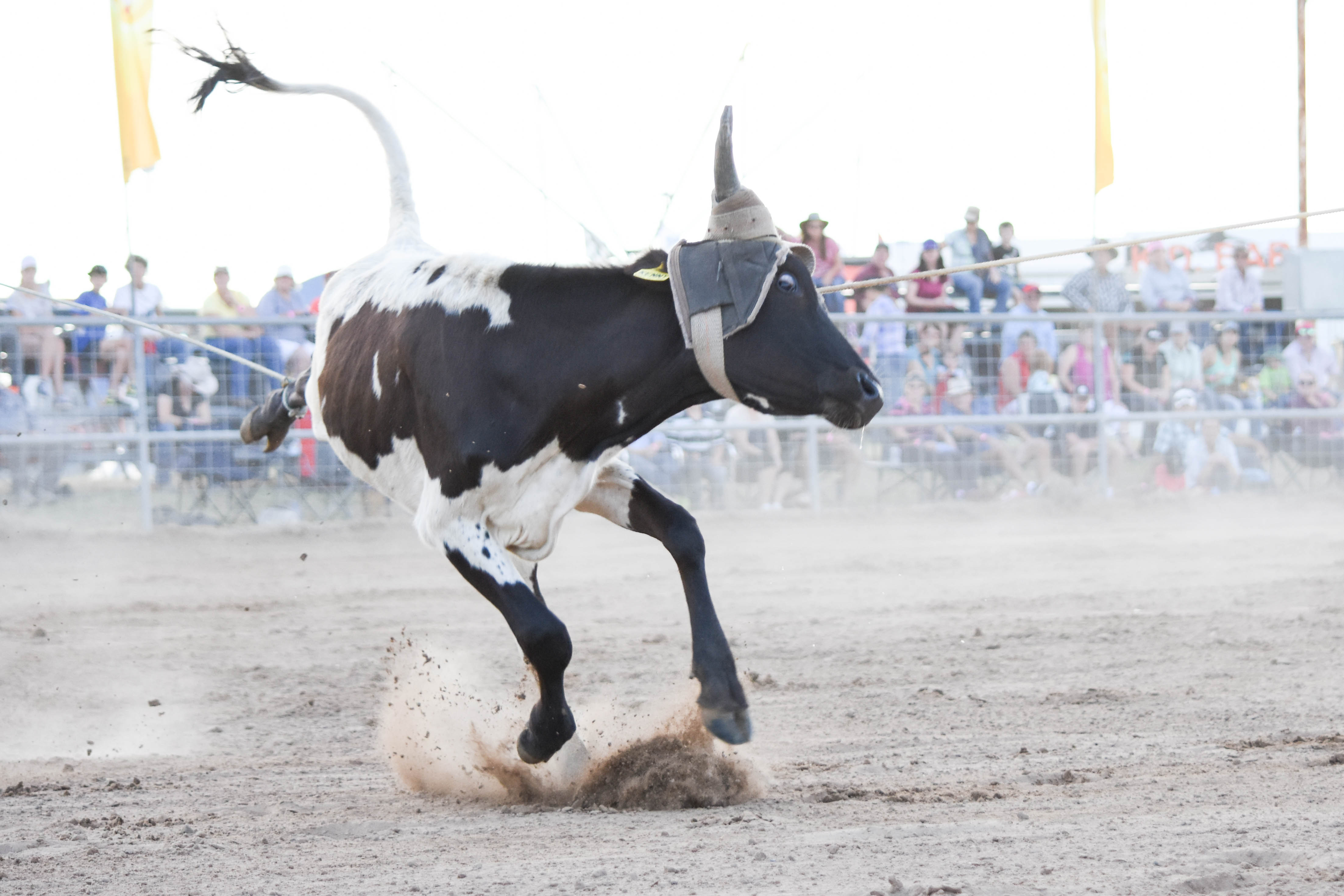 Rodeo Information Rethink Rodeos